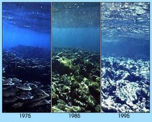 i-433729b3e9fde026ea80786c11e0ab3d-coral