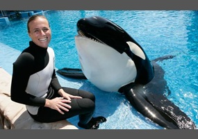 e6a62a8414b78b0e3959a3490020-blackfish-should-killer-whales-be-kept-in-captivity-at-zoos-and-seaworld