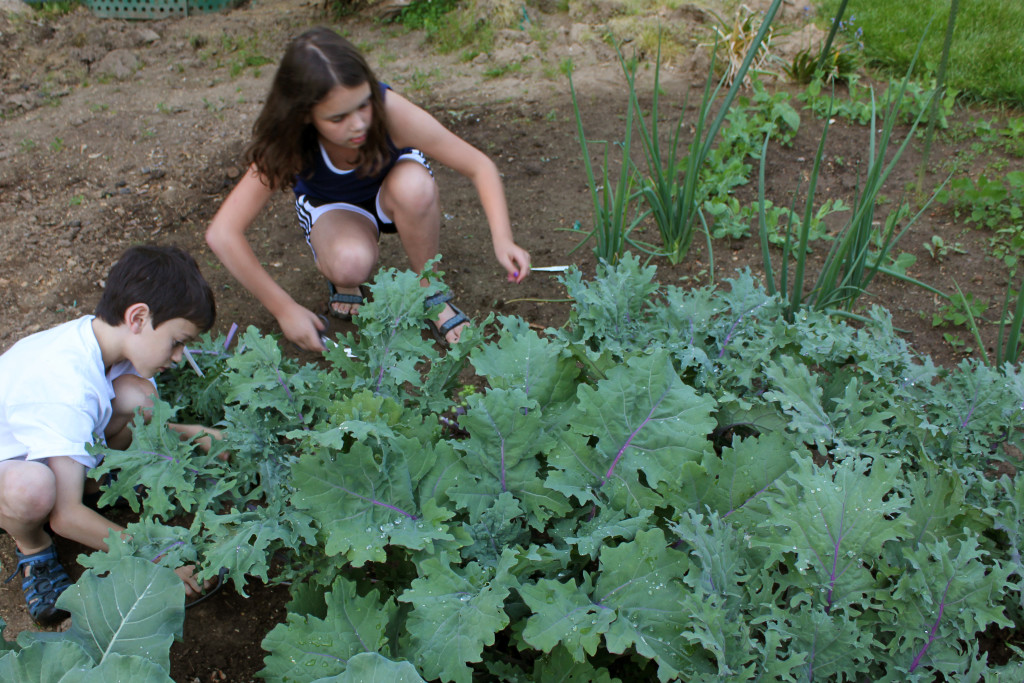 Kids_harvesting_kale
