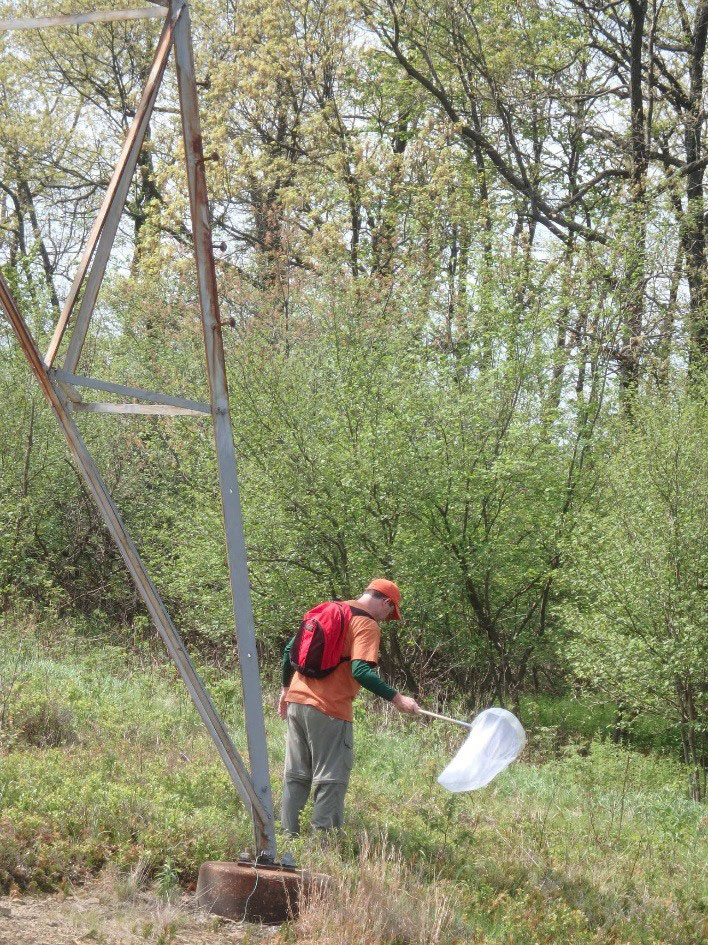 Penn State Research Associate collects pollinators, May 2016 (Mahan, photo)