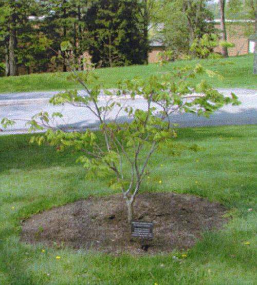 Commemorative Tree with Plaque