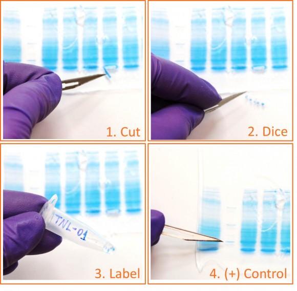 Cutting a gel band