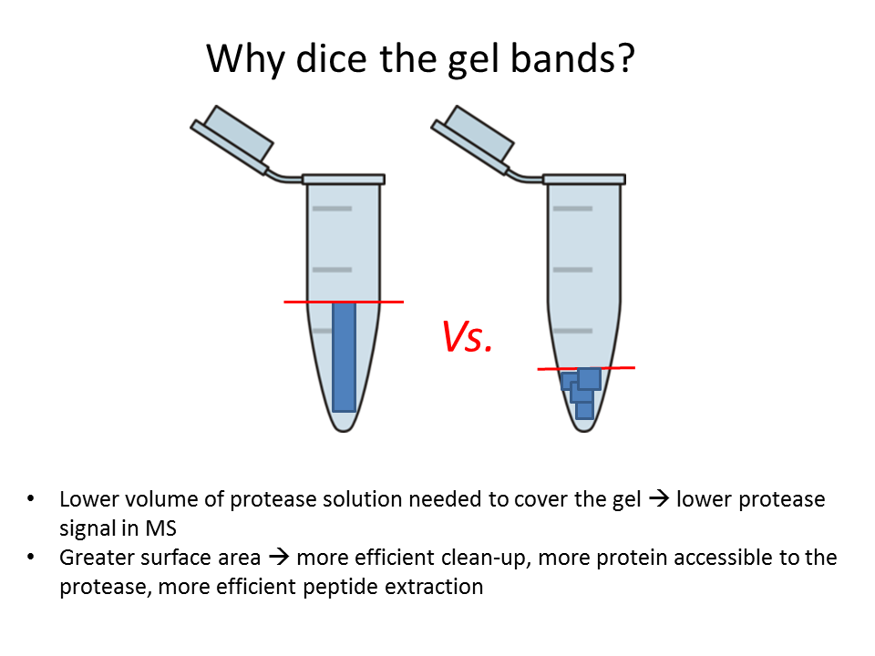 https://cpb-us-e1.wpmucdn.com/sites.psu.edu/dist/b/7129/files/2015/08/Why-dice-the-gels.png