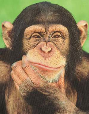 chimpanzee_thinking_poster.jpg