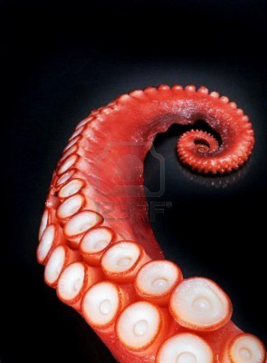 octopus-tentacle.jpg