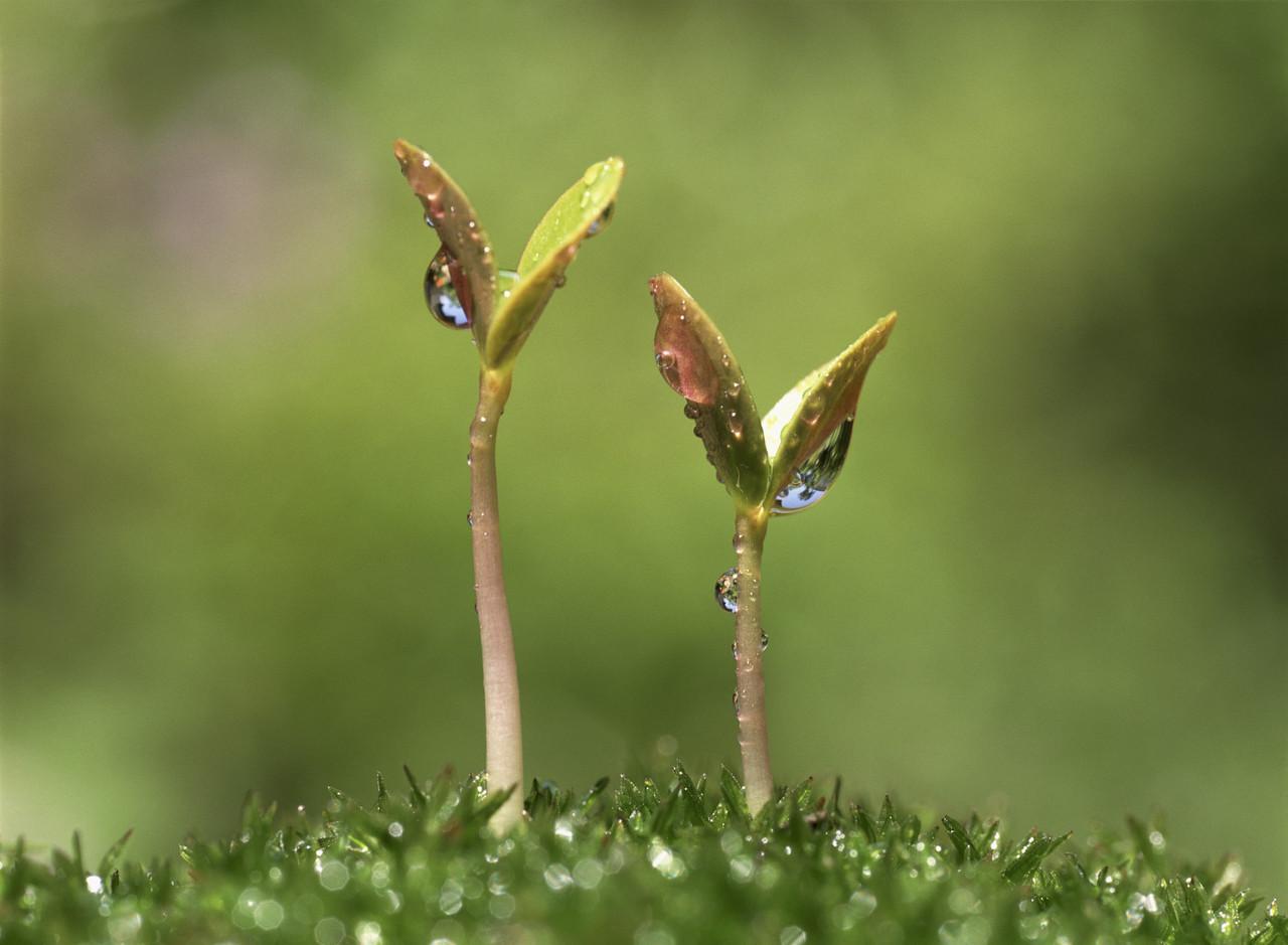 seedling-bgk.jpg