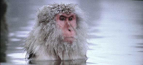 baraka_monkey