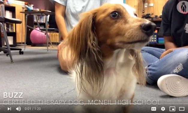 "Therapy Dog ""Buzz"" Brings Calm to Deaf Education Classroom"