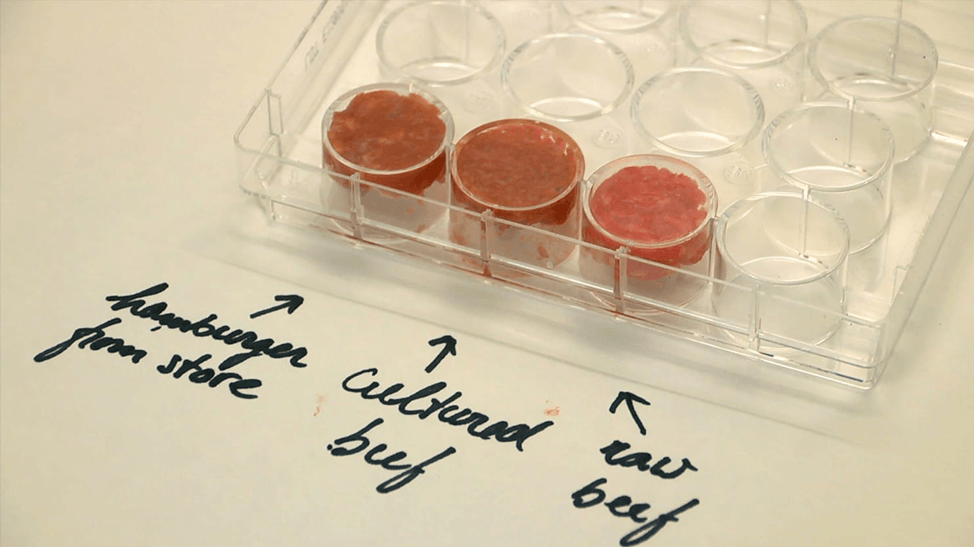 Fresh Out of the Petri Dish: Choosing to Lab-Grow Meat Over Animal Farming?