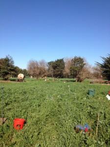 ALBA_cover crop 2