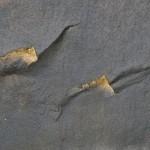 Petrographs (69)