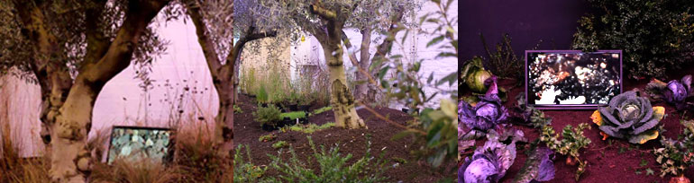 Invisible Garden