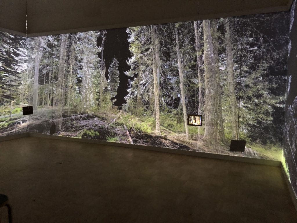 Installation view of Sin Sol at Henry Art Gallery, three gallery walls are seamless projections of images of a forest, and two ipads hang from cables showing an AR app with poetry and characters