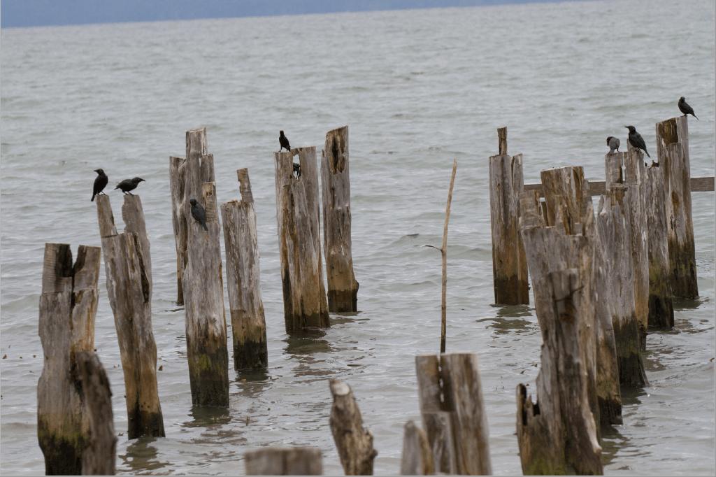 birds sitting on posts