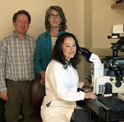 New study shows effects on offspring of epigenetic inheritance via sperm