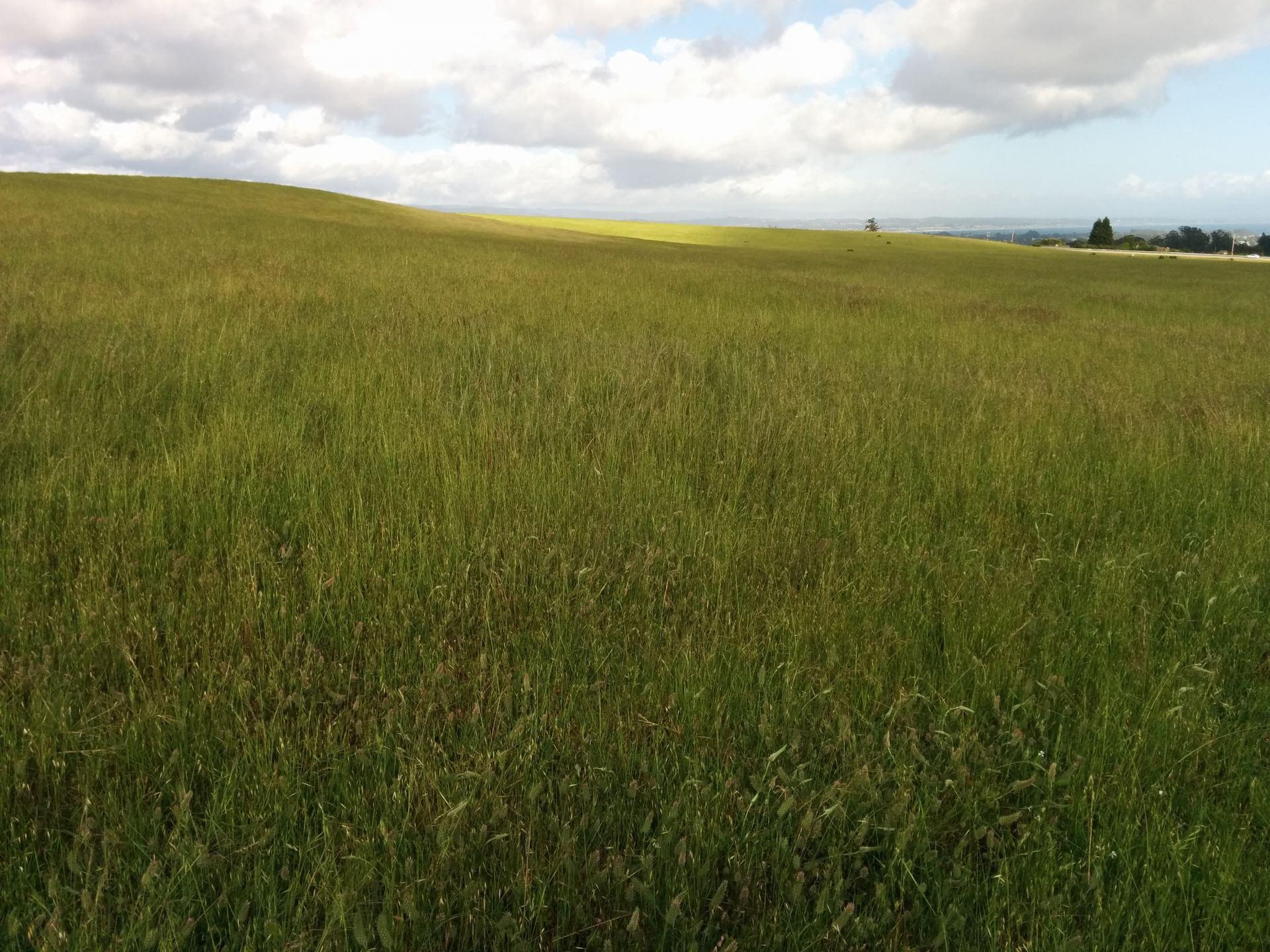 East Meadow UCSC