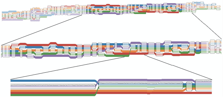 Visualizing Human Genome Variation