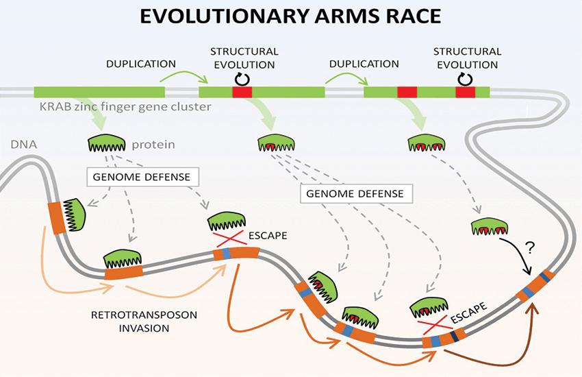 Frank Jacobs, Evolutionary Arms Race
