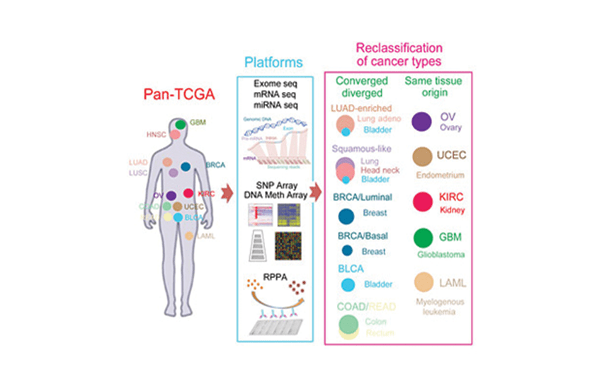 Cancer study reveals powerful new system for classifying tumors