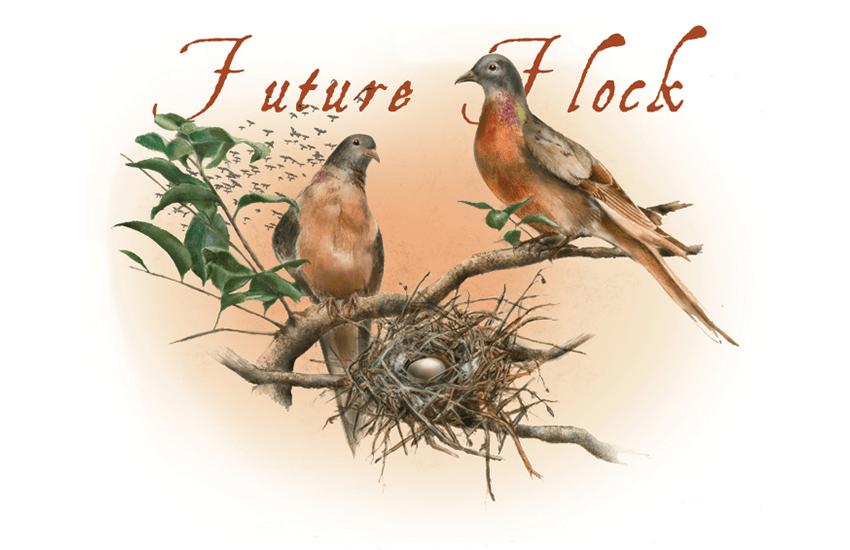 Passenger Pigeon illustration by Jessica Hsiung
