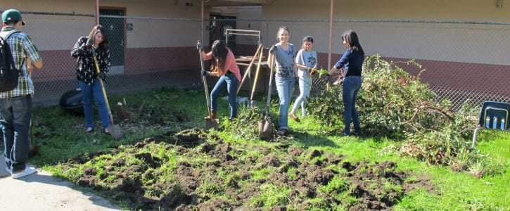Making the School Garden