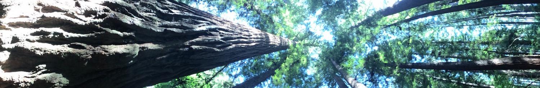 UC Santa Cruz Forest Ecology Research Plot
