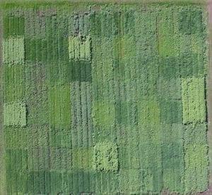 Cover Crops CASFS