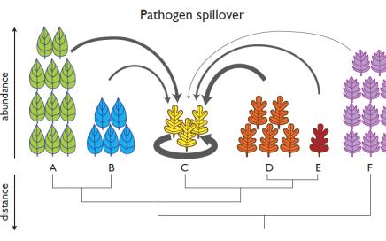 Phylogenetic spillover figure