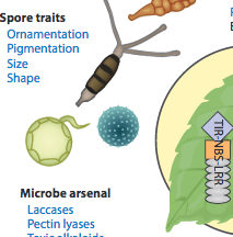 TREE Fig1. Host richness and competition on disease