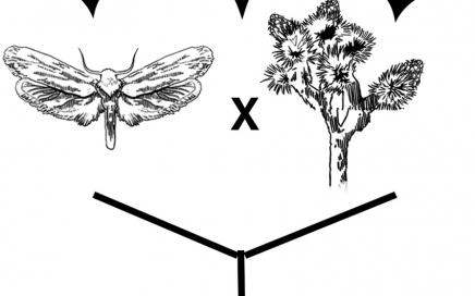 Joshua Tree Fig 2