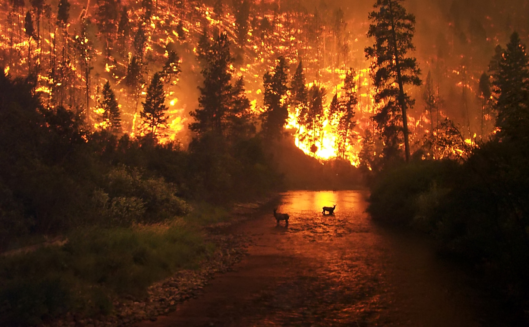 Photo fo Deer Fire