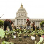 SF City Hall Victory Garden photo