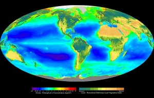Global oceanic and terrestrial photoautotroph production