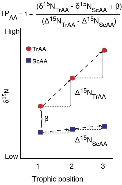 fractionation of amino acid Carbon isotope fractionation of amino acids in fish muscle reflects biosynthesis and isotopic routing from dietary protein kelton w mcmahon1, marilyn l fogel2, travis s elsdon3 and simon r thorrold4 1massachusetts institute of technology and woods hole oceanographic institution, joint program in oceanography.