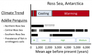 Climate trends, penguin occupation history (solid bars) and dietary trends proposed from previous studies (Polito et al. 2002; Hall et al. 2006, Emslie et al. 2007, Lorenzini et al. 2009, 2010). Samples collected during this study will be used to test penguin population and dietary shifts in response to Holocene-scale climatic warming and cooling trends.