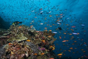 Amazing productivity and biodiversity on remote coral reefs in the central tropical Pacific. (Photo Mark Priest)