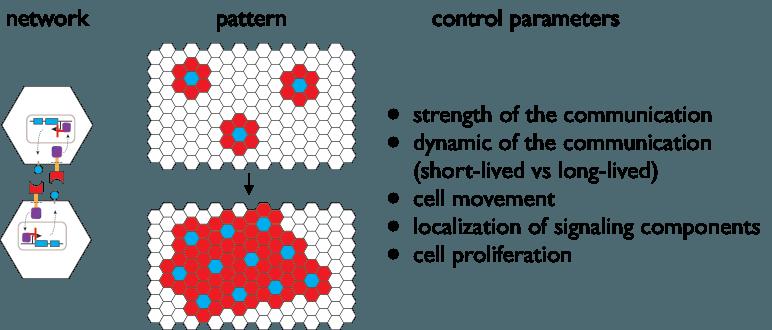 Morfogeneesi