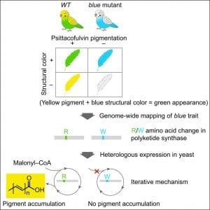 Parrot pigment determination