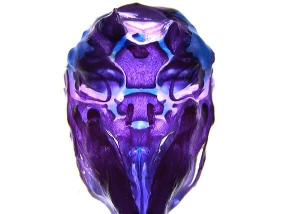 Ventral view of a mouse skull (Image by Camilla Teng)