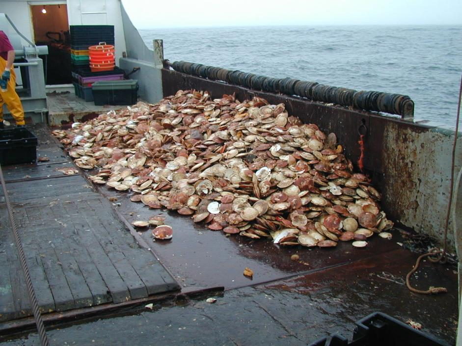 Photo Credit: NOAA Fisheries
