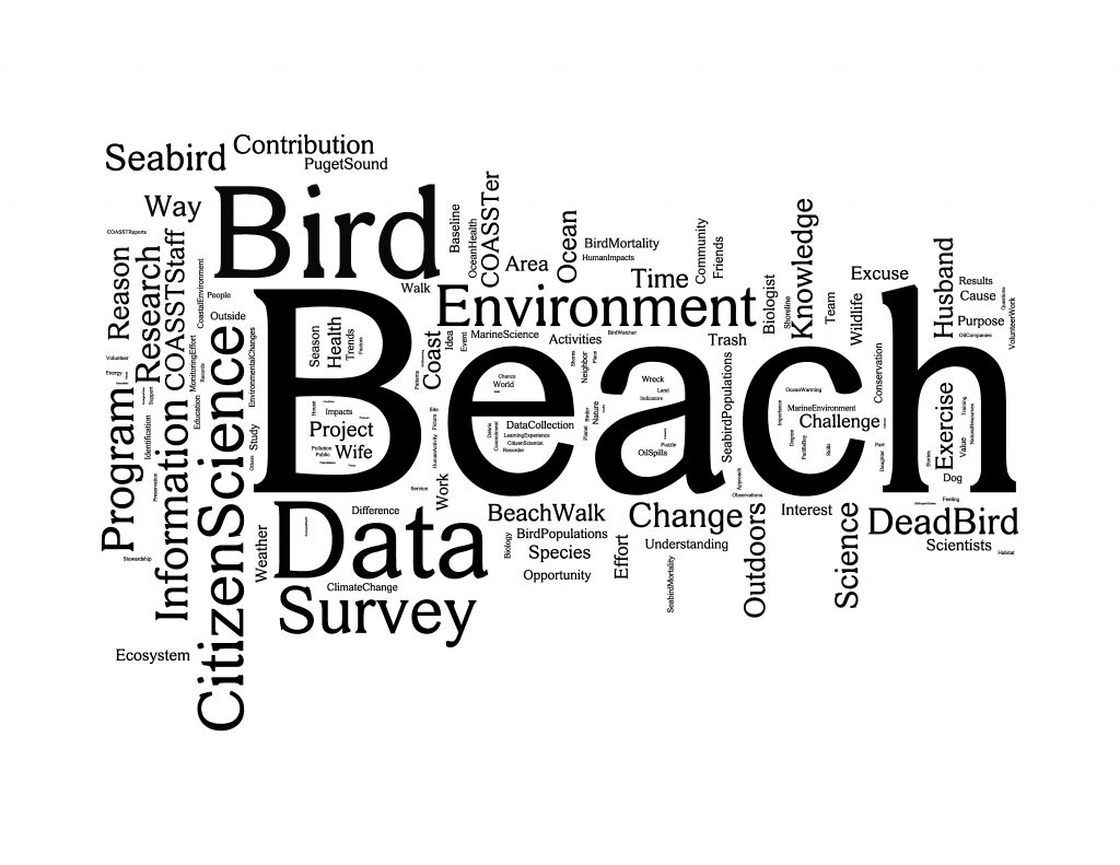 The winners: #1 Beach(es), #2 Bird(s), #3 Data.