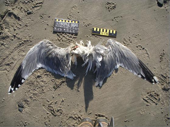 WEGU Photographed by Mariann & Doug Croucher (Oregon Mile 101) 2011-12-02
