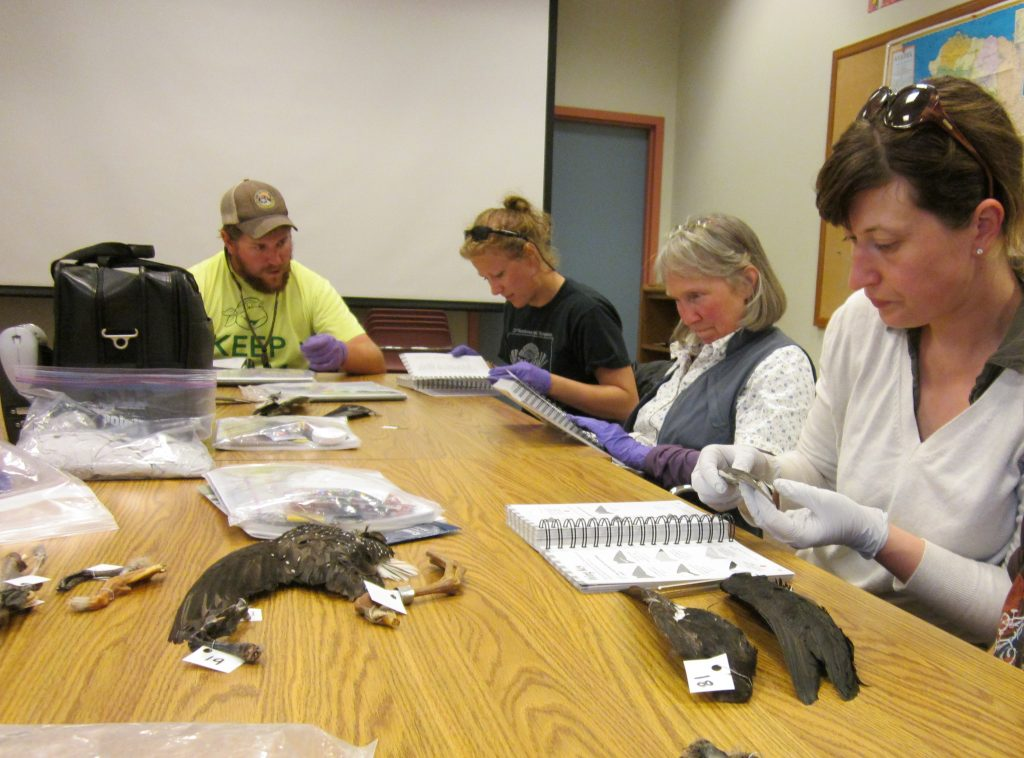 COASSTers try their hand at beached bird identification