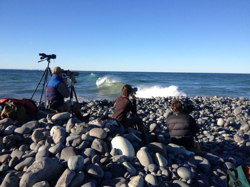 Shore-based surveys of pelagic birds.