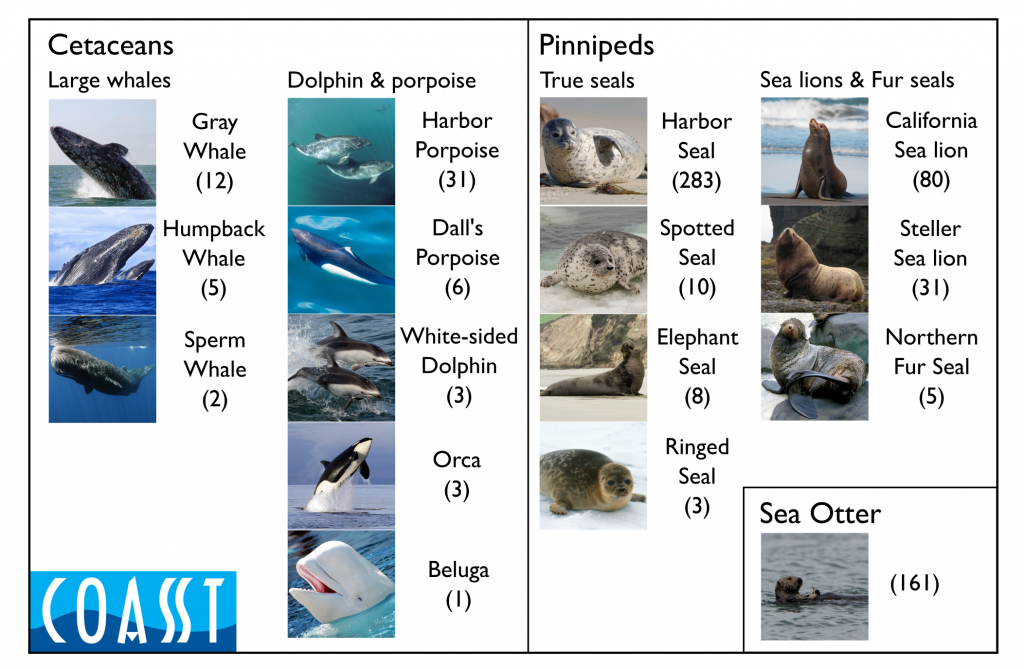 Marine mammals reported by COASST volunteers and identified to species from 2000-present.