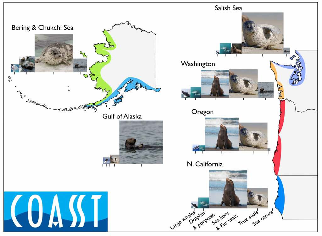 Marine mammal species abundance as a function of location, from northern California north to the Bering and Chukchi Seas.
