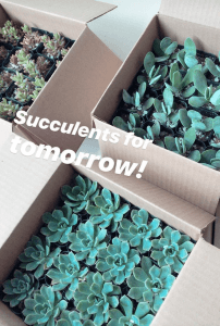Succulents in boxes for DC event