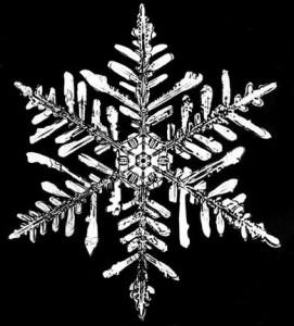Bentley Snowflake photograph