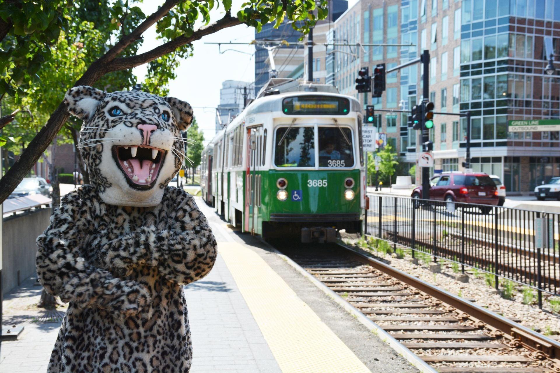 leopard near MBTA Green Line