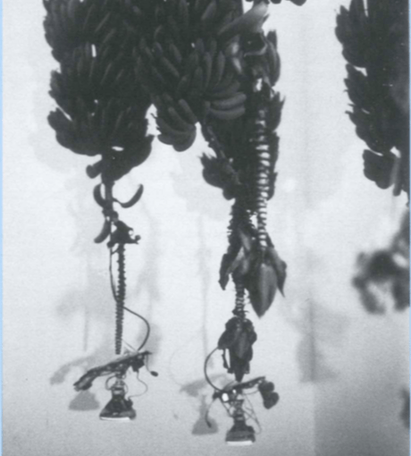 Necrological Flora